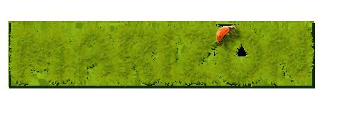 Интернет-магазин кормов, зоотоваров и биопродуктов