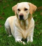 корма для собак средних пород