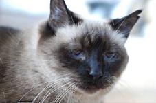 сухой корм для пожилых кошек